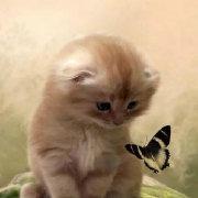 阿乐的小宠物