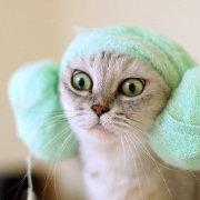 白猫看点娱乐