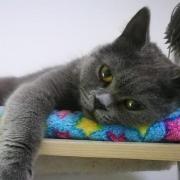 蓝猫胖妞视频