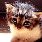 小明明爱猫咪