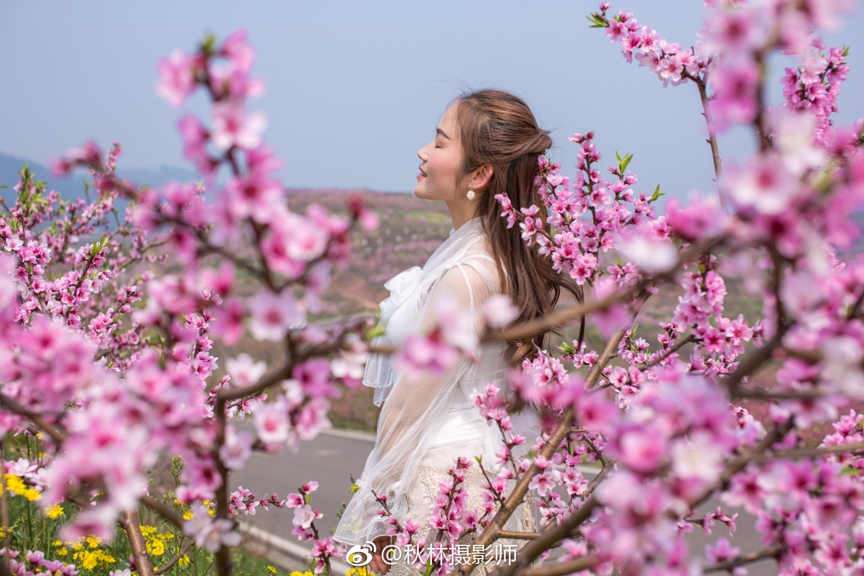 阳春三月看桃花_新浪看点图片