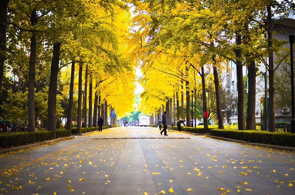 北京农业大学官网_中国农业大学:海淀种猪选育场