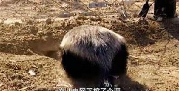 自从海豚哥搬来动物园后,饲养员快气哭了:我走还不行?平头的手工怎么做图片