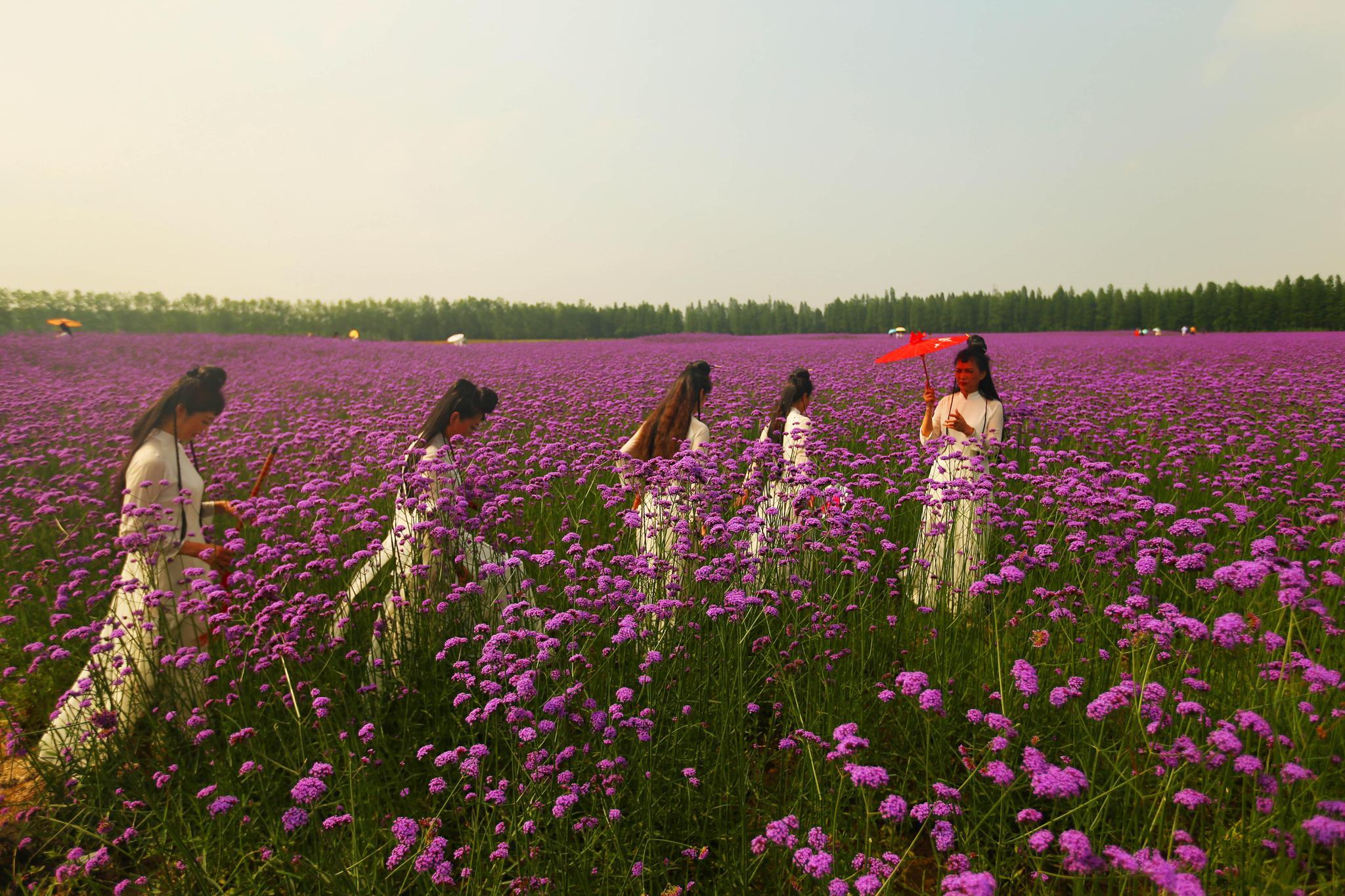 2018中国旅游日湖北分会场在仙桃梦里水乡景区举行