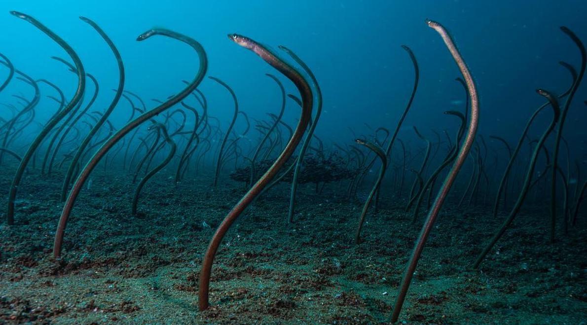 """海底世界的奇妙生活, 鳗鱼也跳起了""""广场舞""""?"""