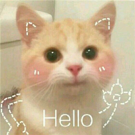 打招呼v图片图片搞笑版:在、我的小表情在表情宝贝包手游大话图片