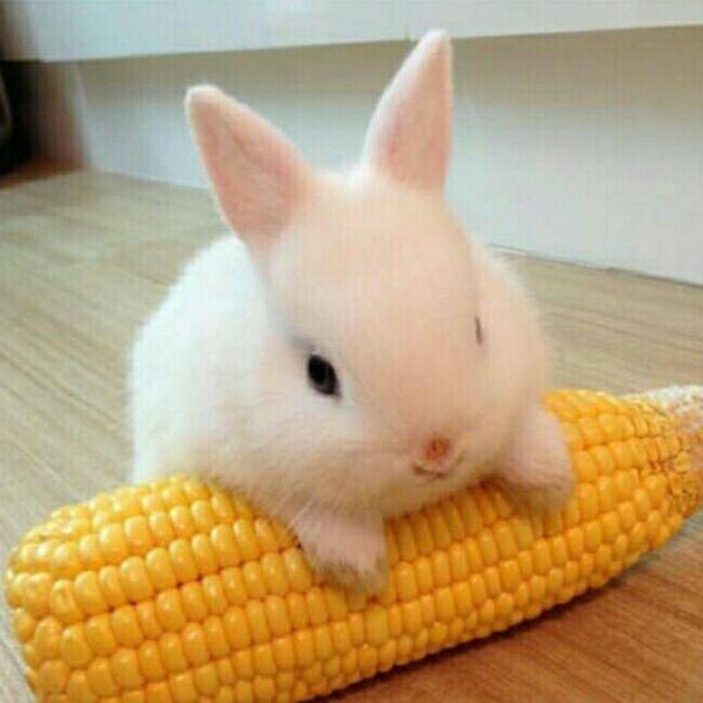 老鼠老虎动物996_996大象兔子壁纸哪款手机游戏叫什么图片