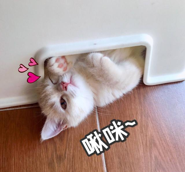 超级可爱的表情猫咪图片笔画敬礼表情包关于图片的简,啾咪~图片
