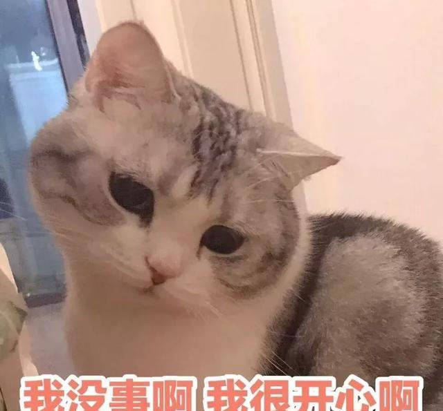 萌猫猫表情包,可爱拿走