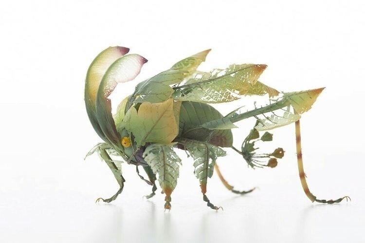 花瓣与叶片 / 日本艺术家hiroshi shinno制作的昆虫模型图片