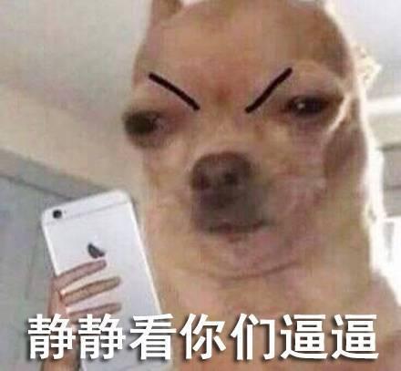 狗狗动态_狗狗图片图配字哈哈表情表情qq大全包表情图片