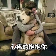 狗狗斗图表情包:心疼的抱抱你,我可真是个小机灵鬼图片