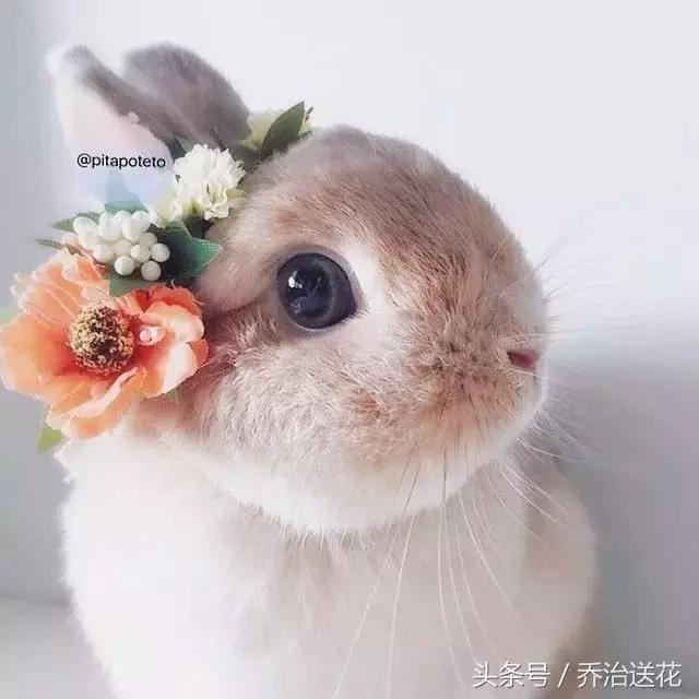 花萌宠|这只兔子,你绝对想承包!饲料泥鳅v兔子图片