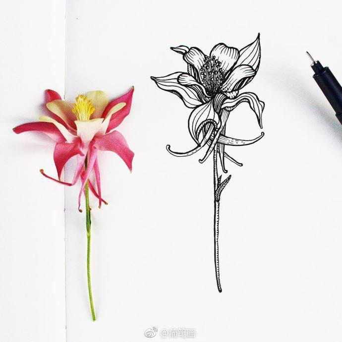 好看的针管笔花卉手绘(ins:menis_art)