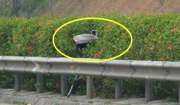 交警:即日起,路上这5种摄像头都不认识,给你3本驾驶证都不够扣