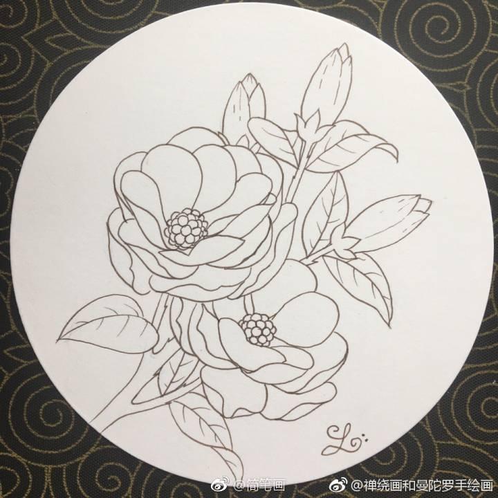 手绘植物花卉线稿(投稿: )