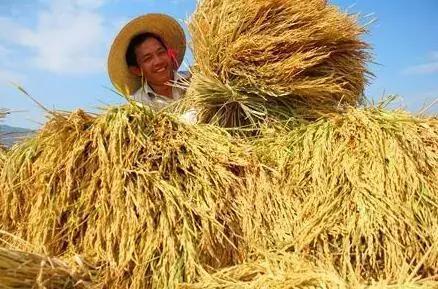 盈利比值很高,但搞农业坚硬是不赚钱?专家揭秘面前缘由