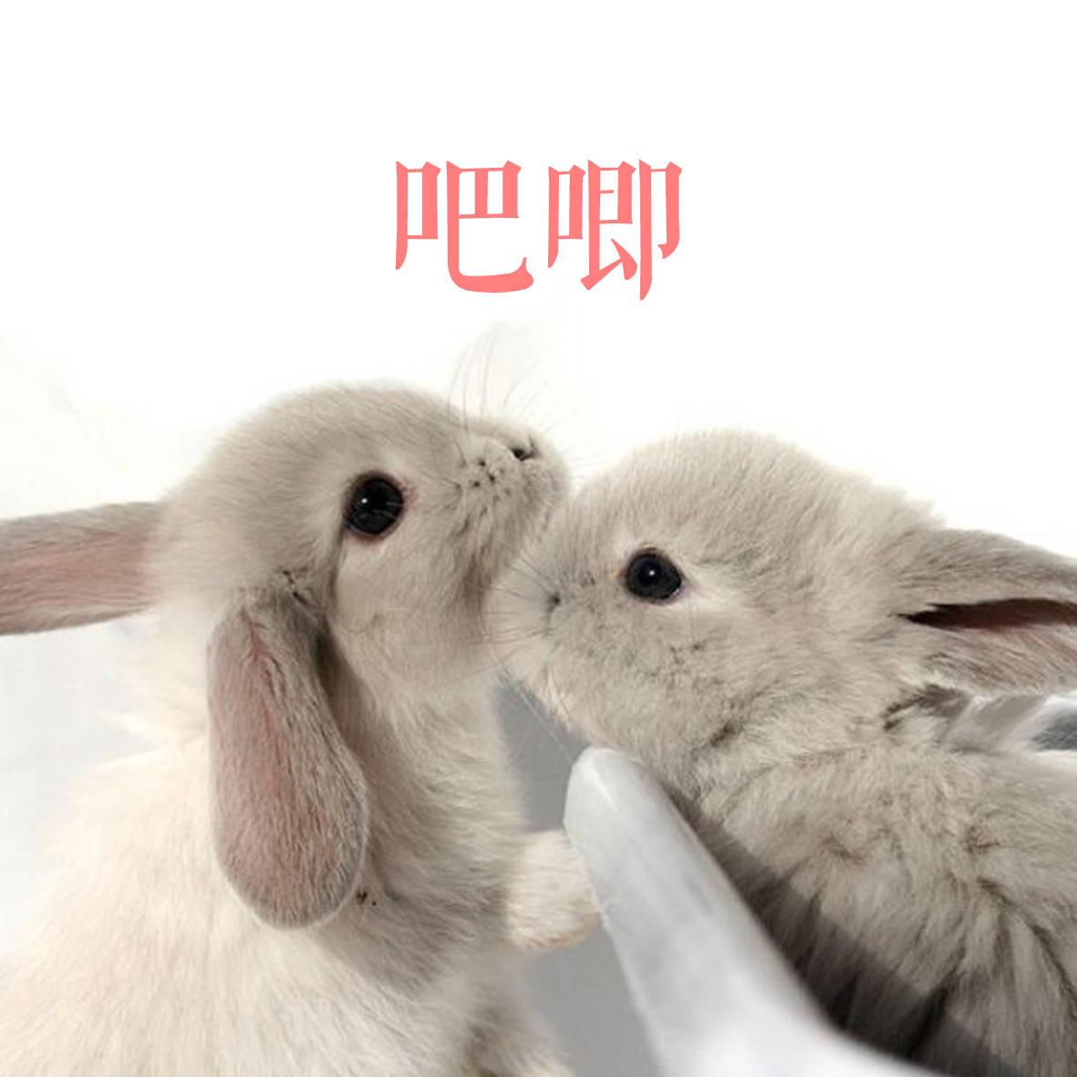 又1波小医院兔子:看着我…凭啥?…都不知道!周末啦中心仓鼠表情攻略图片