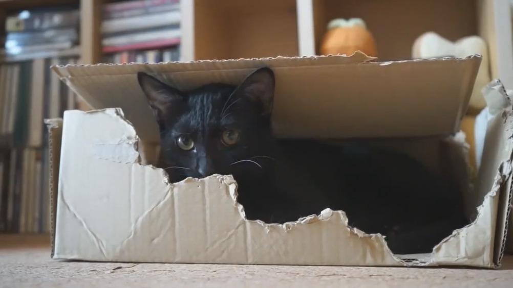 暴力小黑猫,出拳疾如风
