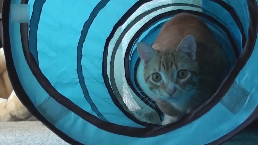 当猫咪们被配上特别的音效