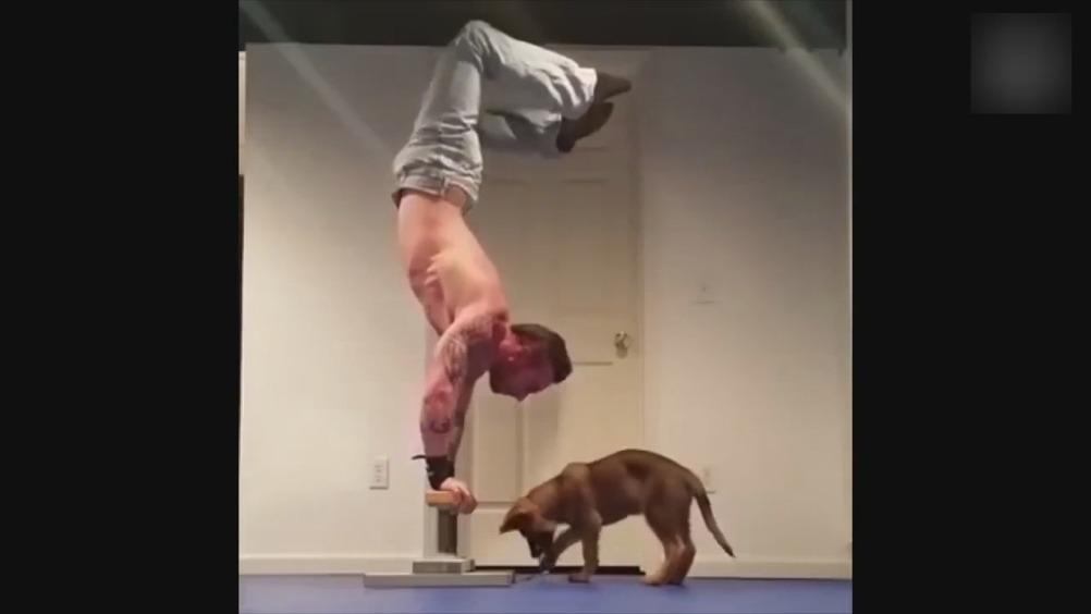 动物捣蛋视频