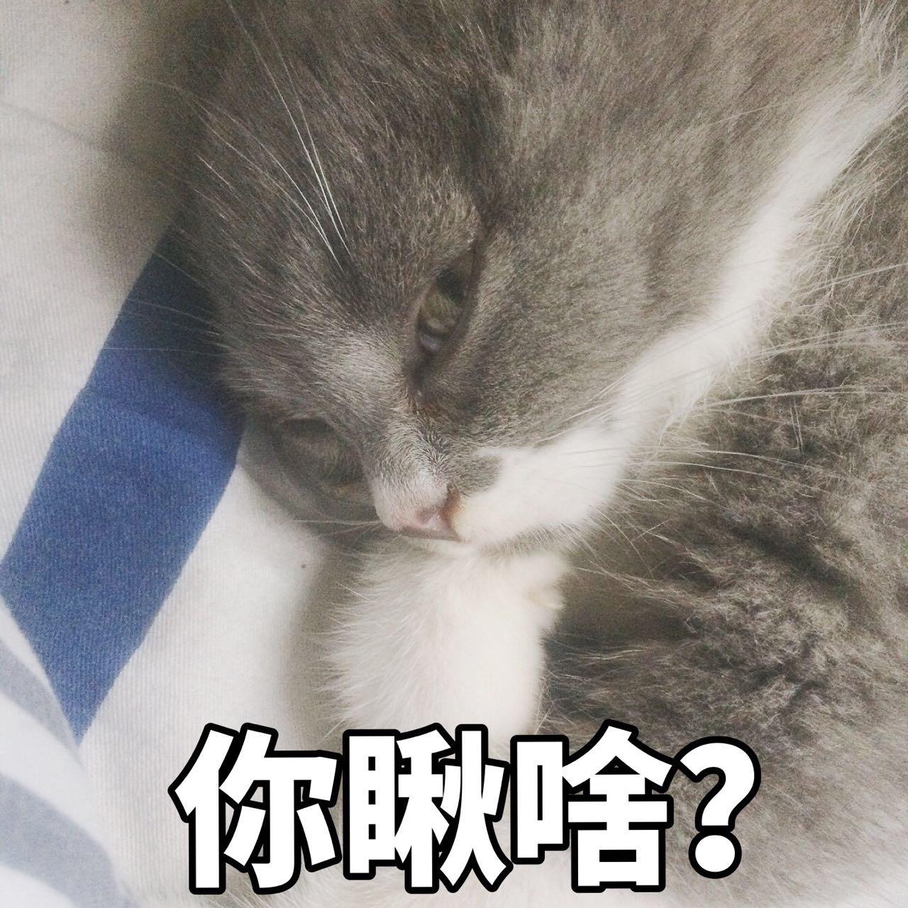 表情猫咪表情包黑火魂净3307:暗中v表情!走开1,你丑到朕了!我的图片