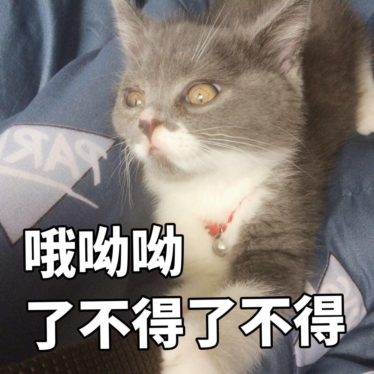表情猫咪表情包人物画图片307:暗中v表情!走开1,你丑到朕了!我的图片