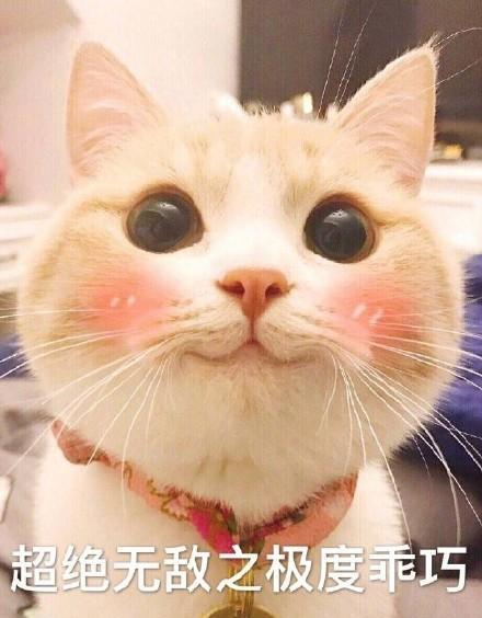表情包里靠乖巧脸蛋来吃饭的那只猫, 大概也就是bobi了.图片