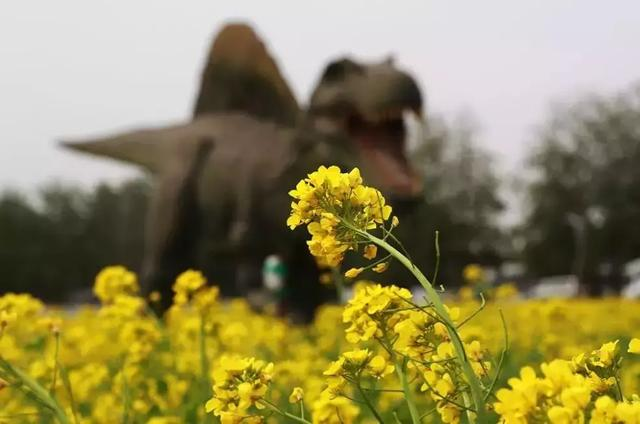 △呆萌可爱的仿真恐龙,为这片花海增添了无限的生机与乐趣.