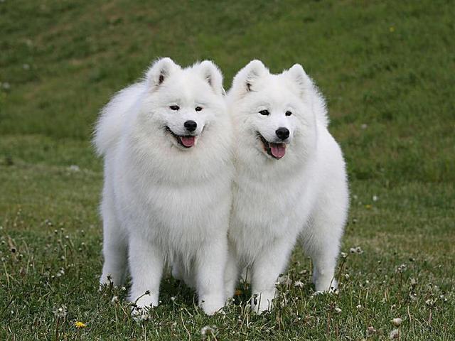 什么狗最可爱最萌?十大比较可爱的狗狗品种!你的爱犬