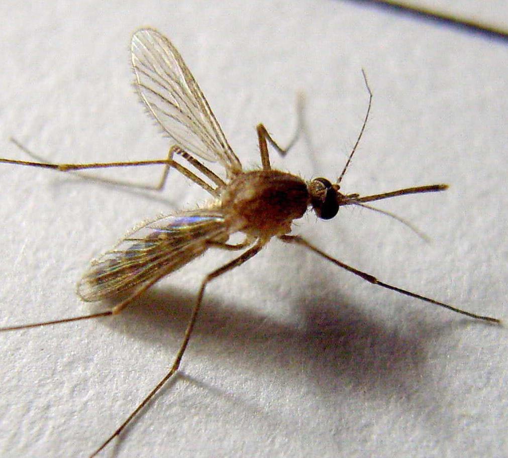蚊子是什么时候出现在地球上的