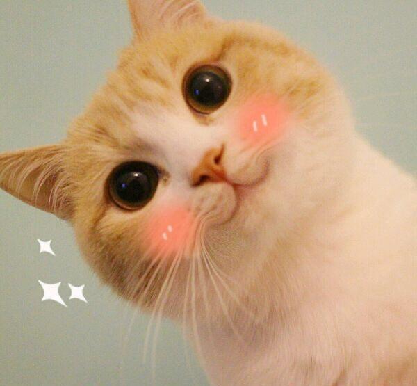 可爱小猫咪小仙女专用表情包分享