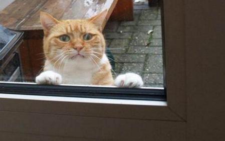 橘猫犯错被主人关外面,歇斯底里求放过,小表情都快把图片