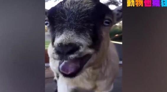 搞笑动物视频,笑哭了