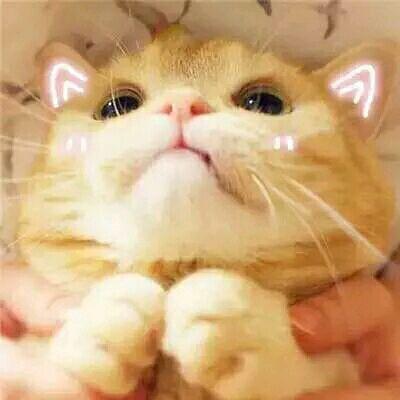 飞一波猫咪表情包给你们,绝对萌到哭图片