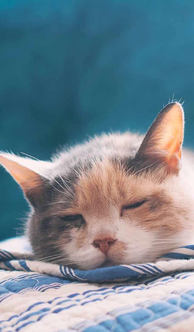 可爱宠物壁纸,喜欢小猫咪嘛