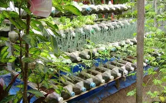 塑料瓶种�9f�x�~j�>�X_她用一个塑料瓶种出的蔬菜,一年都吃不完
