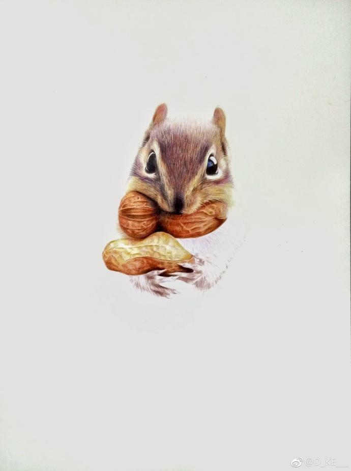 彩铅手绘:松鼠 (作者_新浪看点