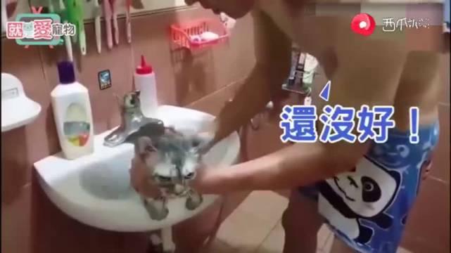 人语八级的猫咪!洗澡时一直问妈咪好了吗好了吗  
