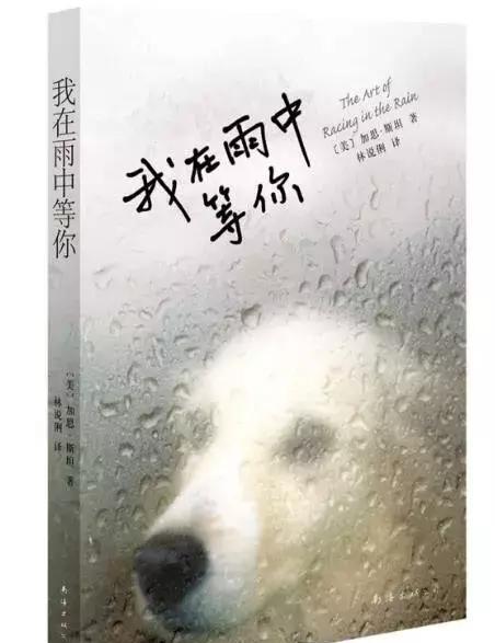 当一只狗拥有了人类的灵魂……—读《我在雨中等你》