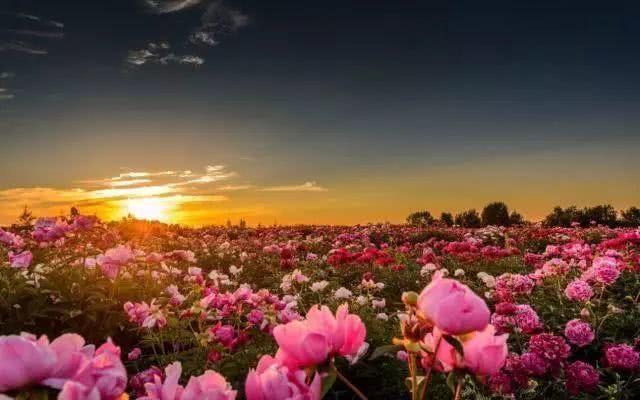 浪漫的事_去全世界最美的花海,做最浪漫的事!
