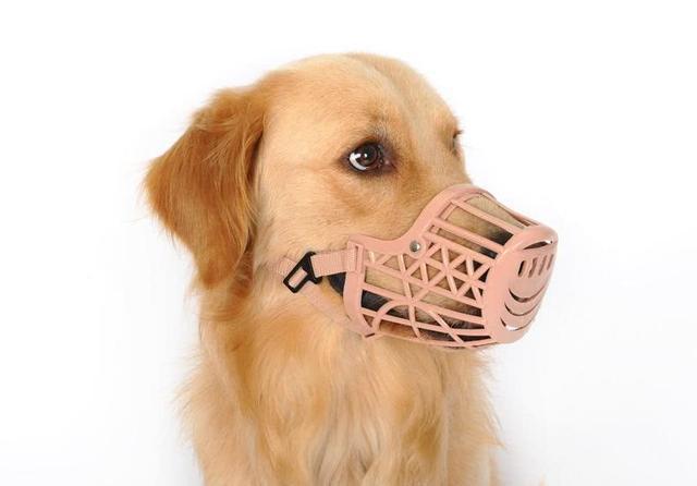 这原属情理之中的事,但有些人却不这么认为了,他们认为给狗狗戴口罩