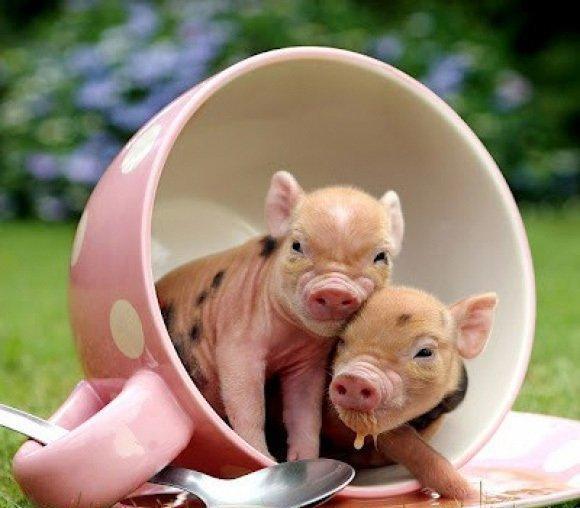 组图: 超萌可爱的动物宝宝照片, 看完保证爱上它们