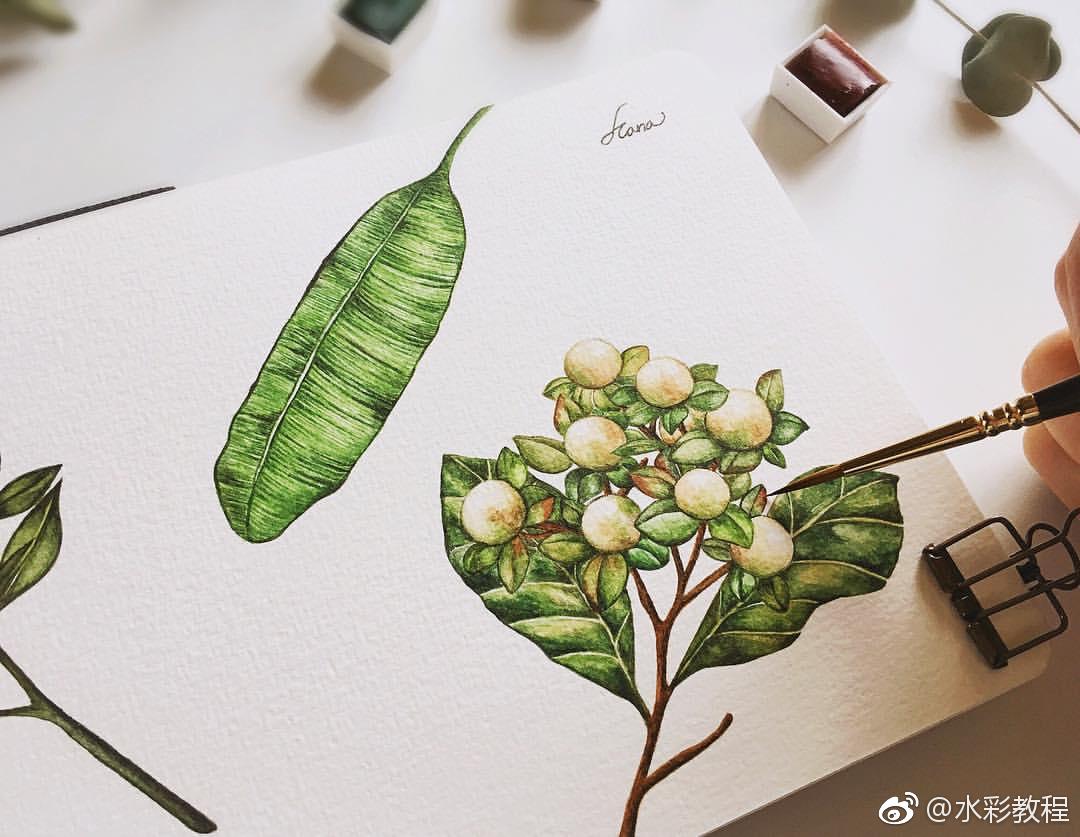 水彩植物蔬菜类作品欣赏哦 by ins: hana_illustration_新浪看点
