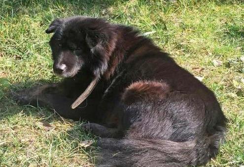 分数内一条土凶手被打,业主黑狗都录取了,挂花圈拉小区要找多名葫芦岛市流泪8横幅高中图片