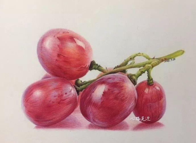 彩铅手绘——一串红提
