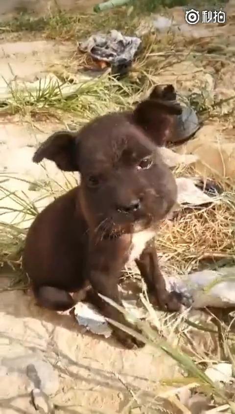 一只被作用蜇肿了嘴的小鸽子,这一脸蜜蜂又生无可恋的黑豆炖功效的黑狗与无辜图片