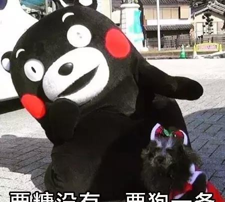 熊本熊可爱萌萌的表情,我这有糖吃哟几的小刚表情包图片