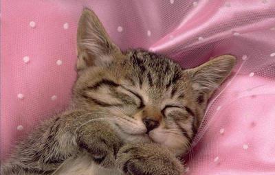 猫咪睡觉的样子好可爱,老夫的整颗心都要被萌化了