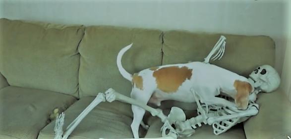主人拿着人体骨架吓唬狗狗,收获的表情包一大堆!图片